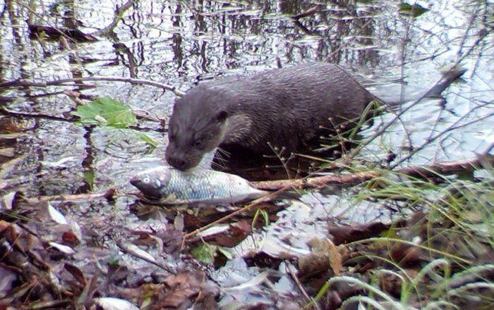Osveta prirode: Divlje životinje u Černobiljskoj zoni
