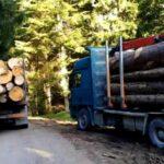Žabljačani ogorčeni zbog sječe šume ka turističkim atrakcijama