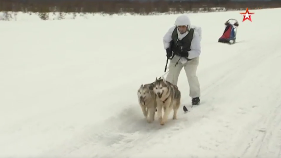 Husky dogs on military training, Russia, 2019