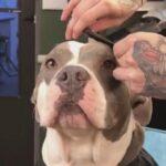 VIDEO Sve se istrpi za najbolju frizuru u gradu