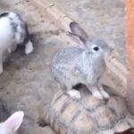 Taksi kornjača: Zec želi da bude brži  /video/