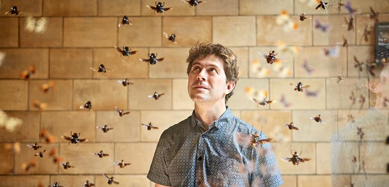 Ose, pčele, mravi pripadaju grupi insekata Himenoptera, a Gavin Broad je njihov veliki obožavalac